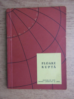 Anticariat: Floare rupta