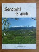 Anticariat: Ioan Puscariu - Sohodolul Branului