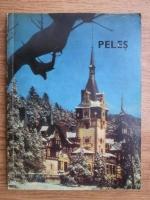 Muzeul Peles