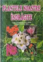 Plantele noastre indragite. O floare frumoasa poate crea o armonie desavarsita in caminul nostru...