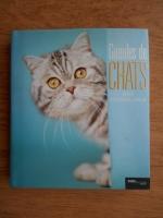 Rachael Hale - Gueules de chats